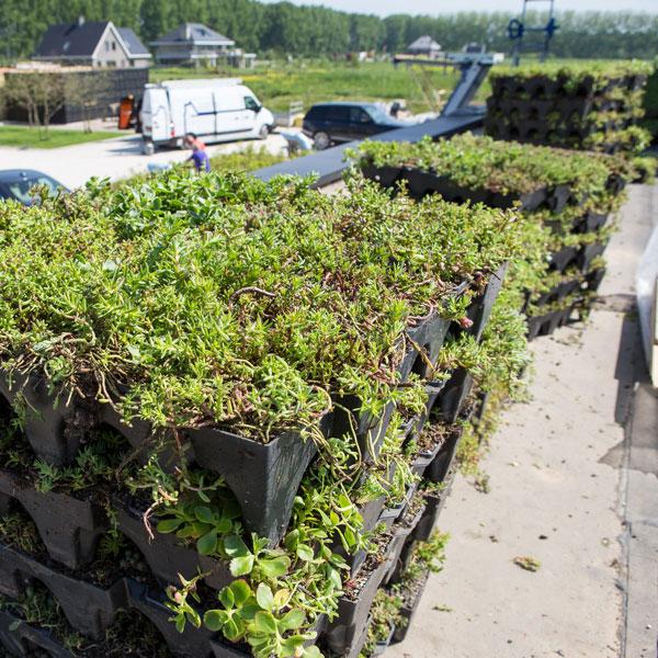 Groendak de duurzame dakoplossing met sedum casettes | Royal Roofing Materials