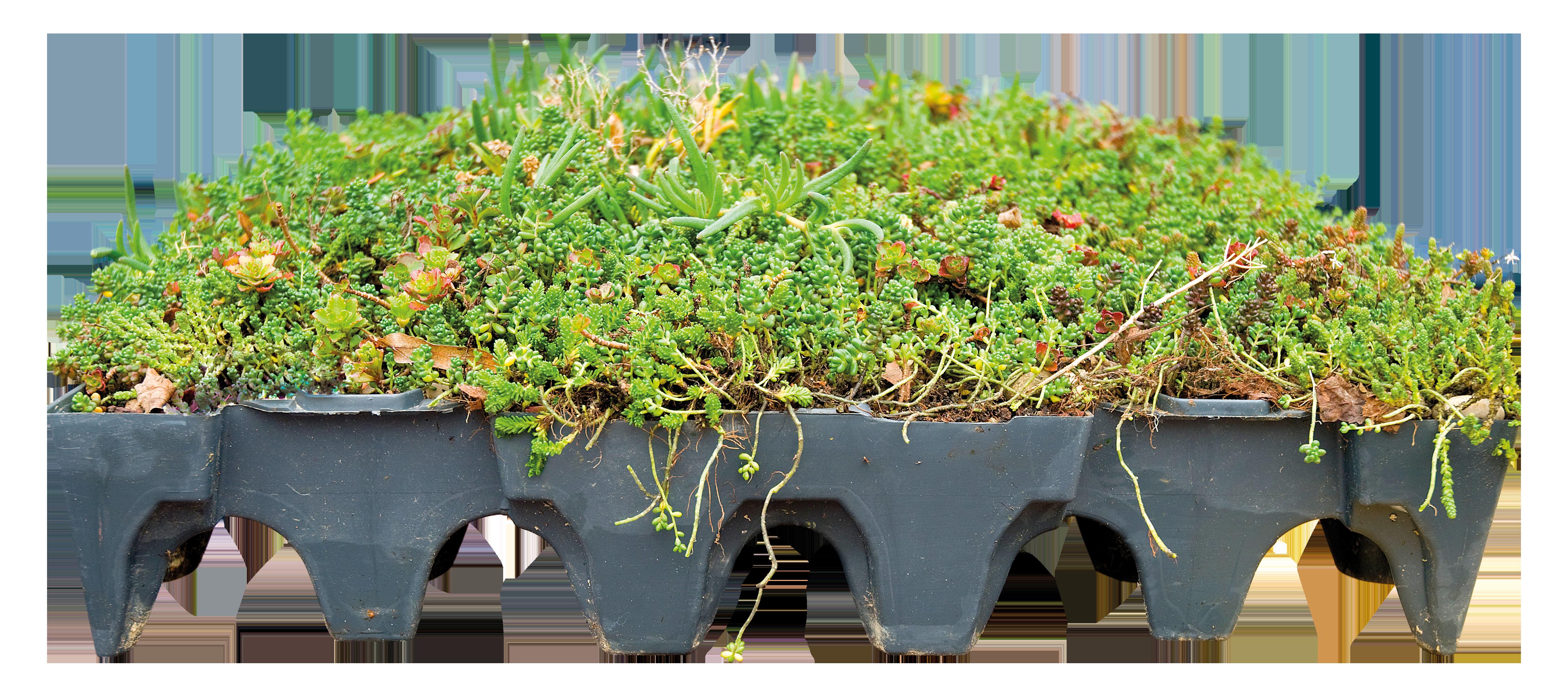 Groendaken & daktuinen | Groendak bedekking | Royal Roofing Materials