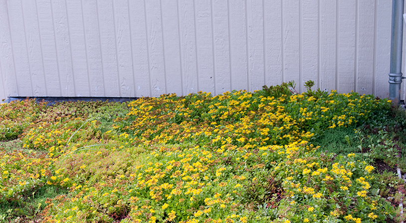 De voordelen van een groen dakterras