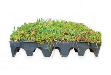 Dakafwerken? Kies voor een groendak of daktuim | Royal Roofing Materials