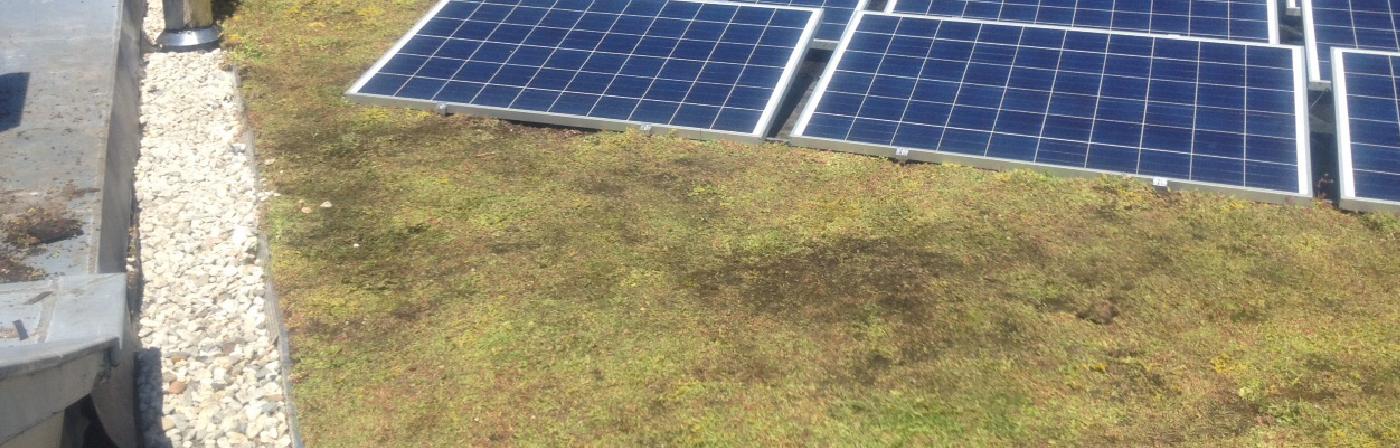 Subsidie op dakbedekking? Belastingvoordeel met groendaken, zonnepanelen en Cool roofs! | Royal Roofing Materials