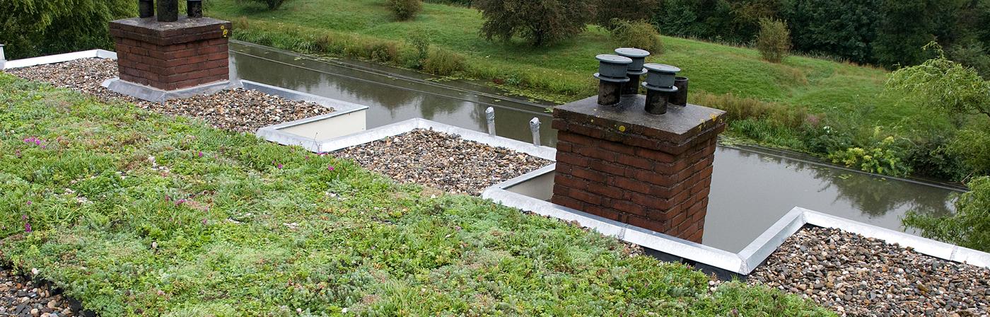 Groendaken, dakterrassen & daktuinen | Royal Roofing Materials